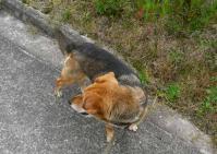散歩20100531-4