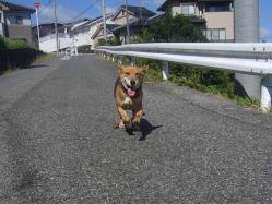 散歩20130926-2
