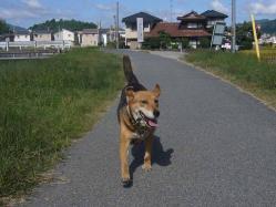散歩20130926-5