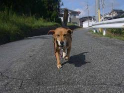 散歩20130928-3