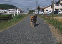 散歩20130929-4