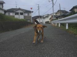 散歩20130930-2