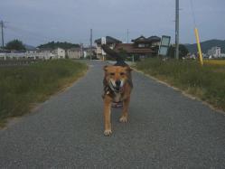散歩20130930-3