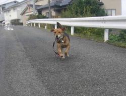 散歩20131026-4