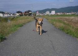 散歩20131026-5