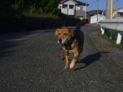 散歩20131027-2