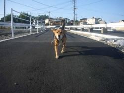 散歩20131027-3