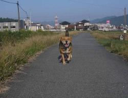 散歩20131027-4