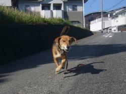 散歩20131028-1