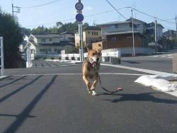 散歩20131028-2