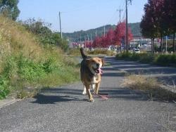 散歩20131028-4