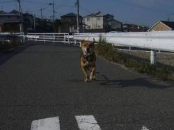 散歩20131029-3