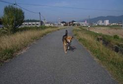 散歩20131029-5