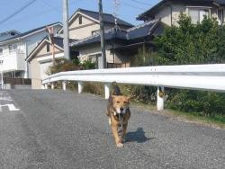 散歩20131030-1