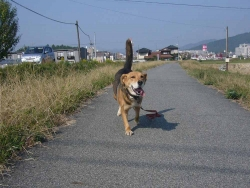 散歩20131030-4
