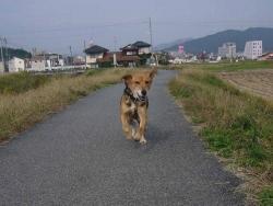散歩20131031-5