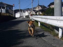 散歩20131123-2