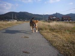 散歩20131125-2