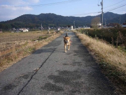 散歩20131125-3