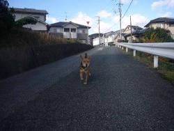 散歩20131126-1