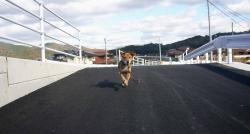 散歩20131126-2