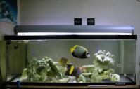 大きな魚が居た頃の水槽~胃癌手術入院前 です
