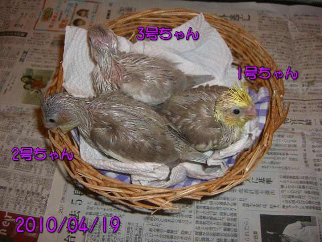 image01_20100421214507.jpg