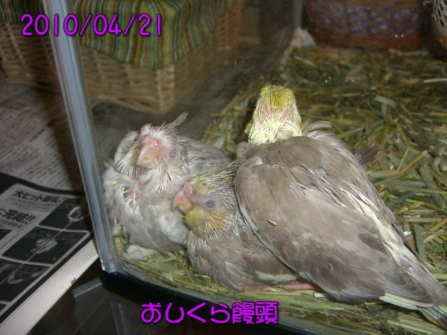 image01_20100421221239.jpg