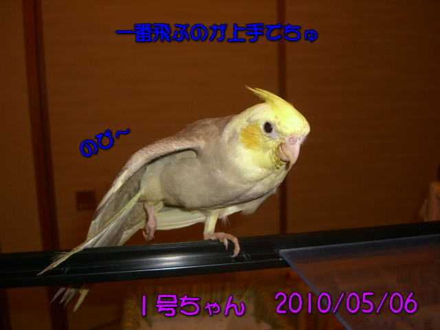 image01_20100507223215.jpg