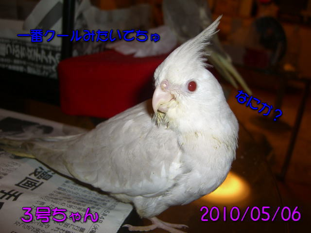 image03_20100507224309.jpg