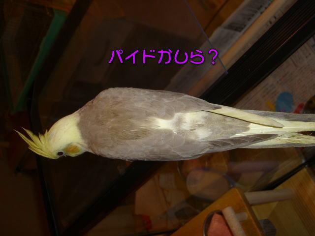 image04_20100507215523.jpg
