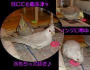 image05_20100507221452.jpg
