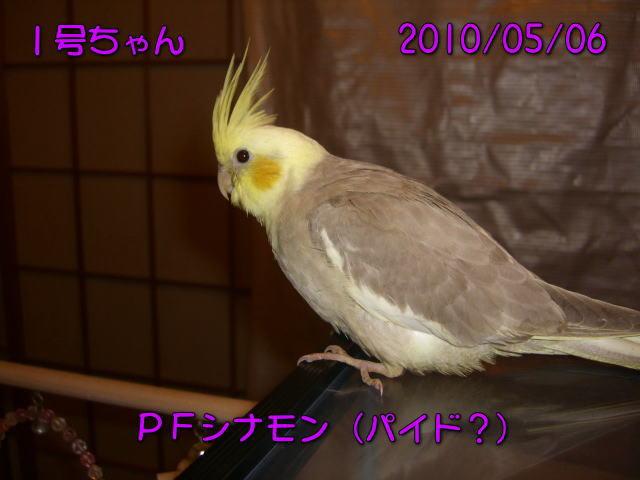 image10_20100507214610.jpg