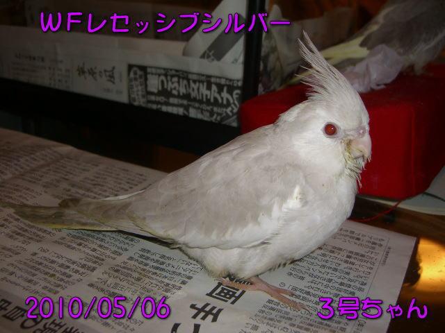 image11_20100507220004.jpg
