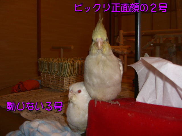 image14_20100507220426.jpg