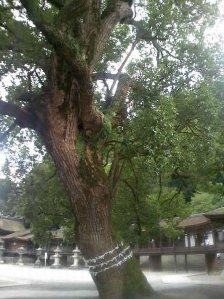 金比羅山御神木
