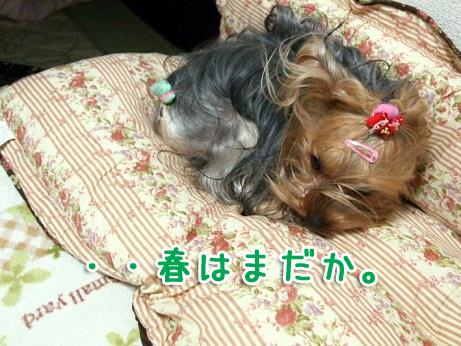 0_20100209194556.jpg