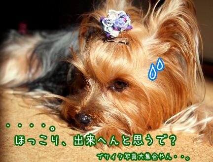 11_20101205121204.jpg