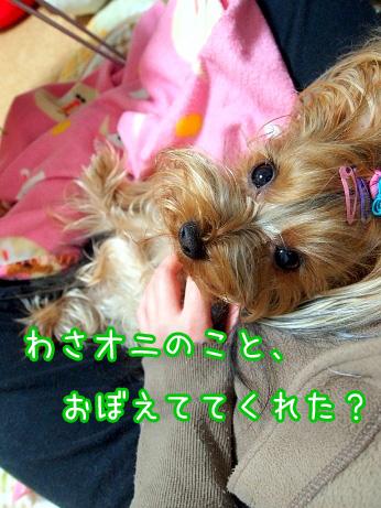 1_20100218171701.jpg