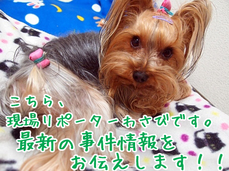 1_20100220201946.jpg