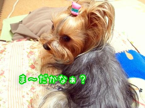 1_20100224170529.jpg