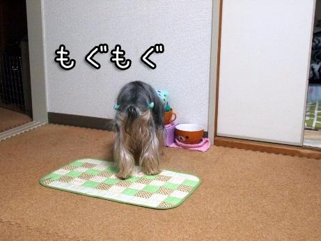 1_20100227192559.jpg