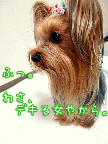 1_20100228200815.jpg