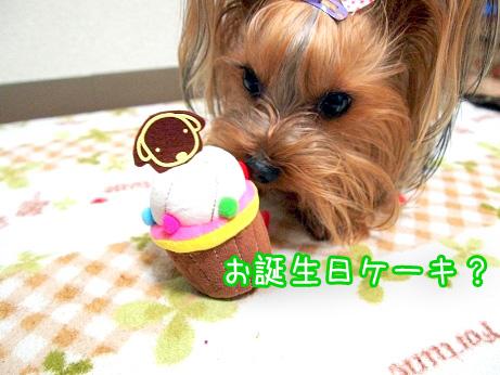 1_20100302194551.jpg