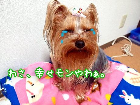 1_20100303190026.jpg