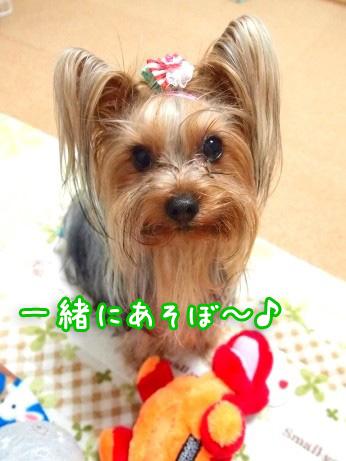 1_20100304174534.jpg
