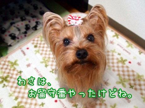 1_20100308165830.jpg
