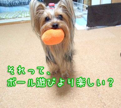 1_20100314161456.jpg