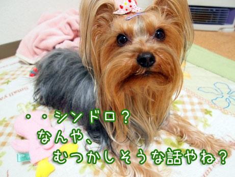 1_20100316195520.jpg