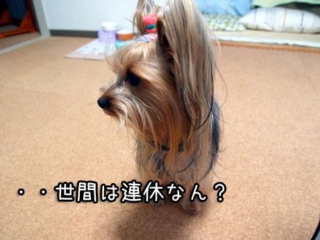 1_20100320212711.jpg